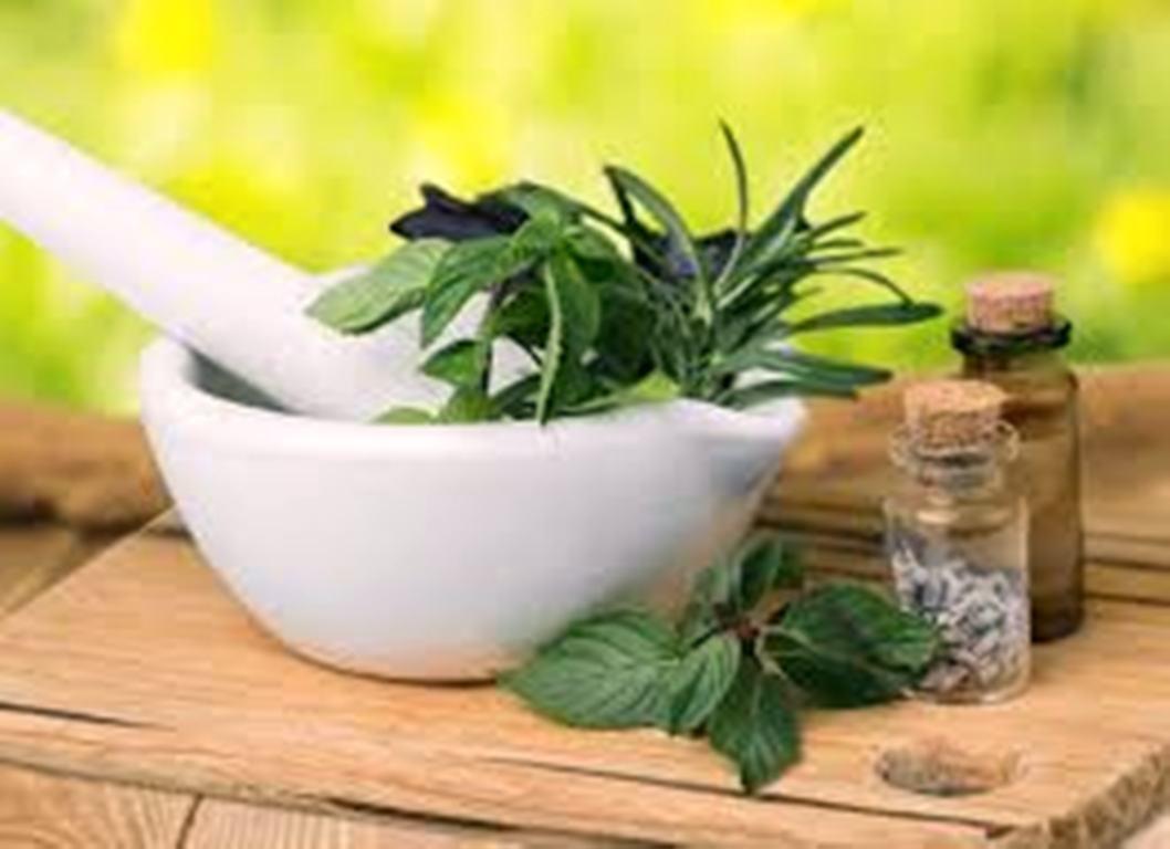 48 طرح توسعه کشت و فرآوری اولیه گیاهان دارویی حمایت شد